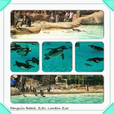 #photoamay-challenge-instagram-London-zoo-penguins