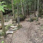 Timber bridge in the Watagans (65880)