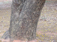 https://lh6.googleusercontent.com/-XRBNM86QrYE/T4VJOlVCNHI/AAAAAAAAATc/RX_I9EddUHA/s1600/ZZ+Unknown+087+Tree+-+Bark.jpg