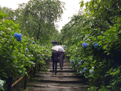 雨と運休で行先変更、鎌倉の紫陽花を鑑賞