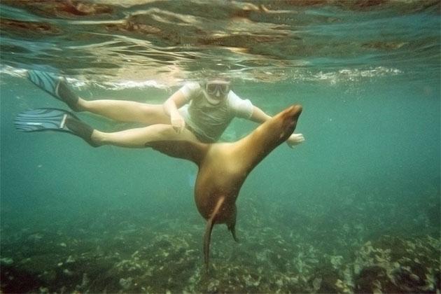 WIldlife encounter under water at San Cristobal Island.