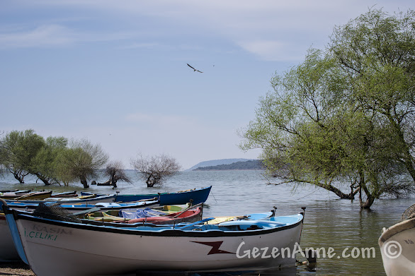Uluabat gölü kıyısındaki Gölyazı'da baharda suya gömülmüş ağaçlar, Bursa