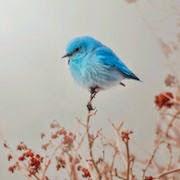 к чему снятся птицы на дереве?
