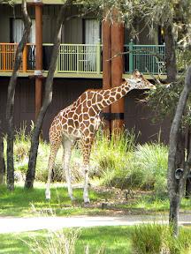 Disney 2009 - Animal Kingdom Lodge