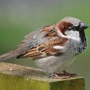 Spurgt_Fuglen