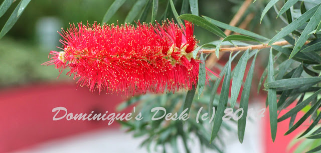 Bottle brush like flower