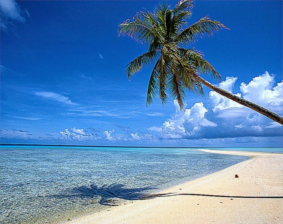 Beautiful Beach Backgrounds Palm Trees Beautiful Beach Backgrounds