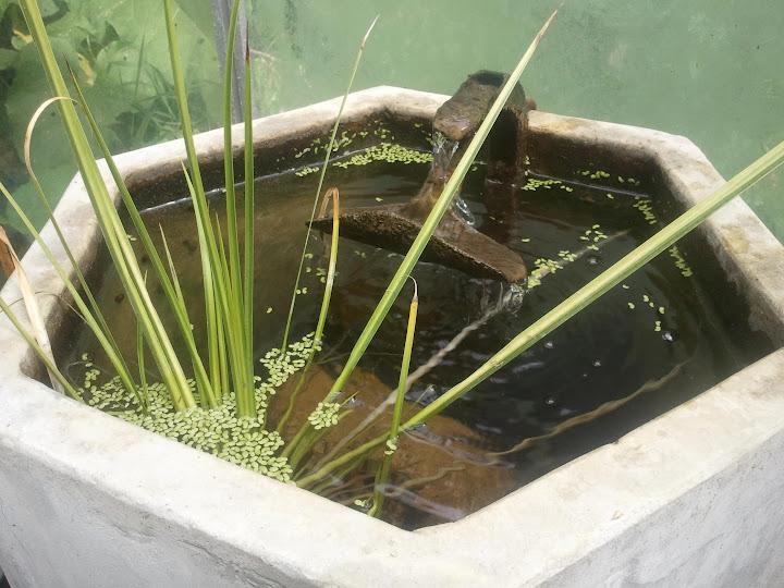Vatten är ett trevligt inslag i växthuset