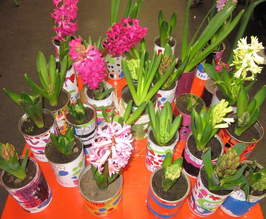 La diversidad en los jacintos innovarte educaci n for Modelo de proyecto de plantas ornamentales