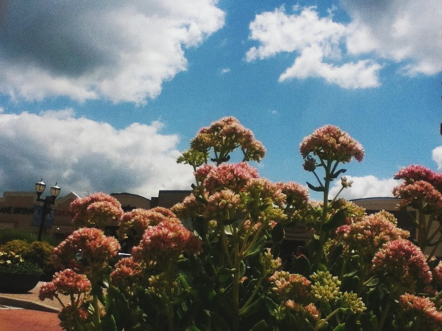 antique, vintage iphone photography, flowers and sky