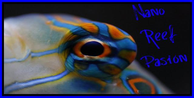 Nano Reef Pasión