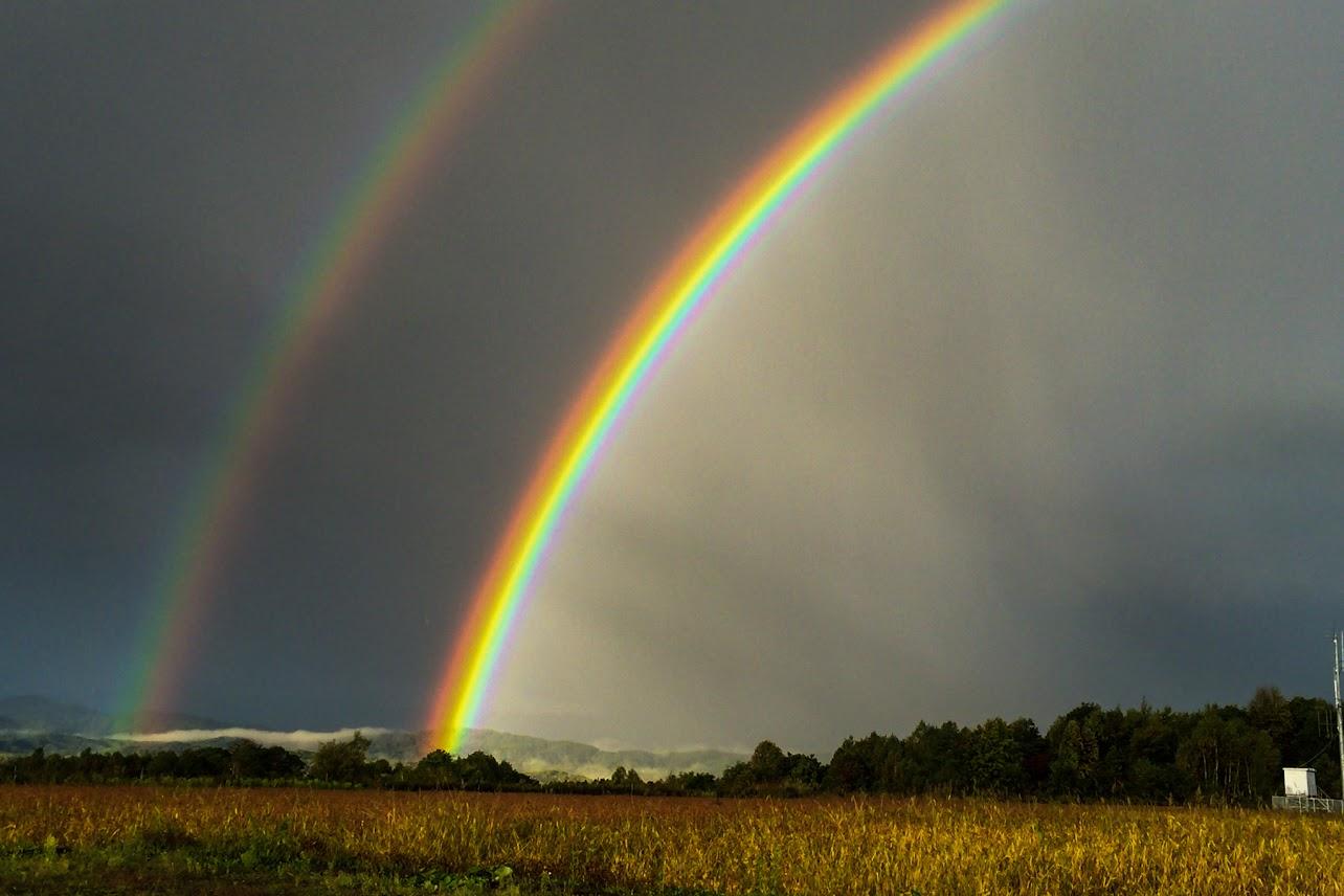 くっきりと色鮮やかな虹