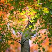 К чему снятся деревья?