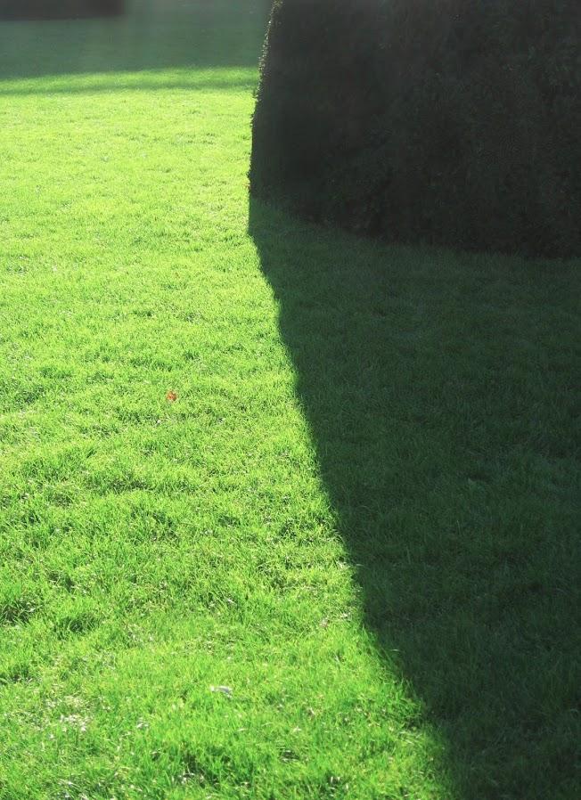 Grassshadows