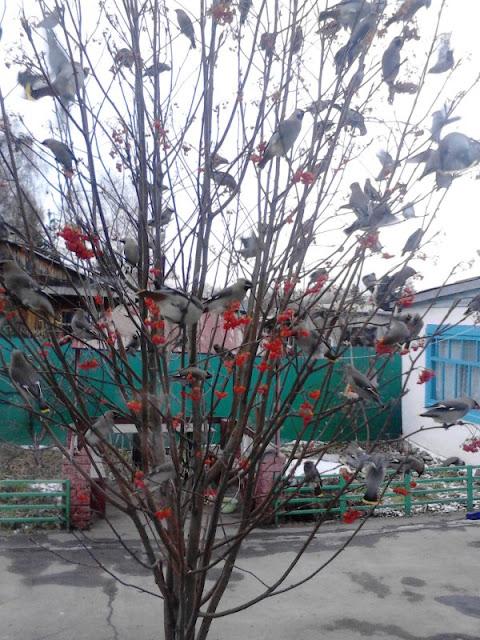 Вести с полей, садов и огородов-2012 - Страница 27 68287_600x800_IMG_20121103_153910