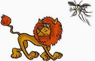 El leon y el mosquito luchador