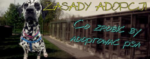 zasady adopcji