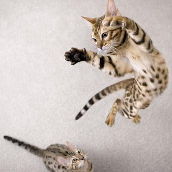 salto gatto