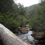 Fallen in Glenbrook Creek (73836)