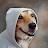 M Fang avatar image