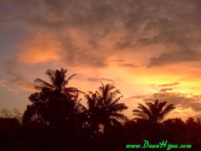 Daun Hijau dan matahari yang mulai tenggelam (4)