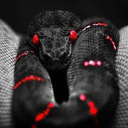 к чему снится черная змея
