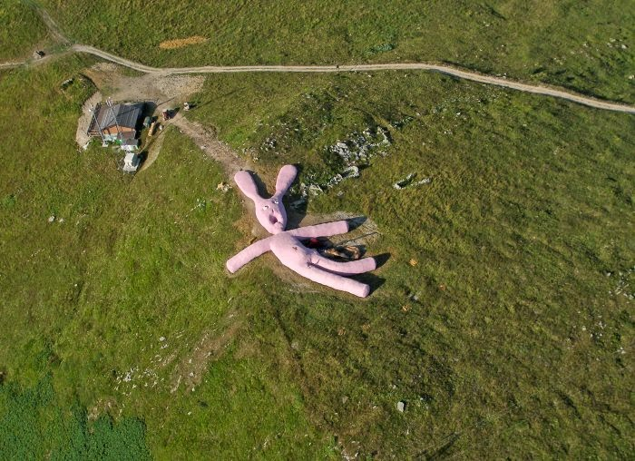 Hase, conejo rosa gigante