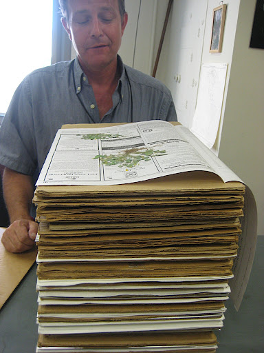dried plants are kept carefully stacked in the same papers used to press them, eventually each will be mounted and catalogued