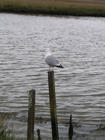 Seagull on a post