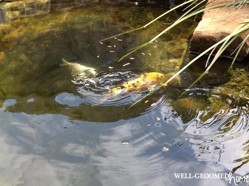 Pond Spring Algae