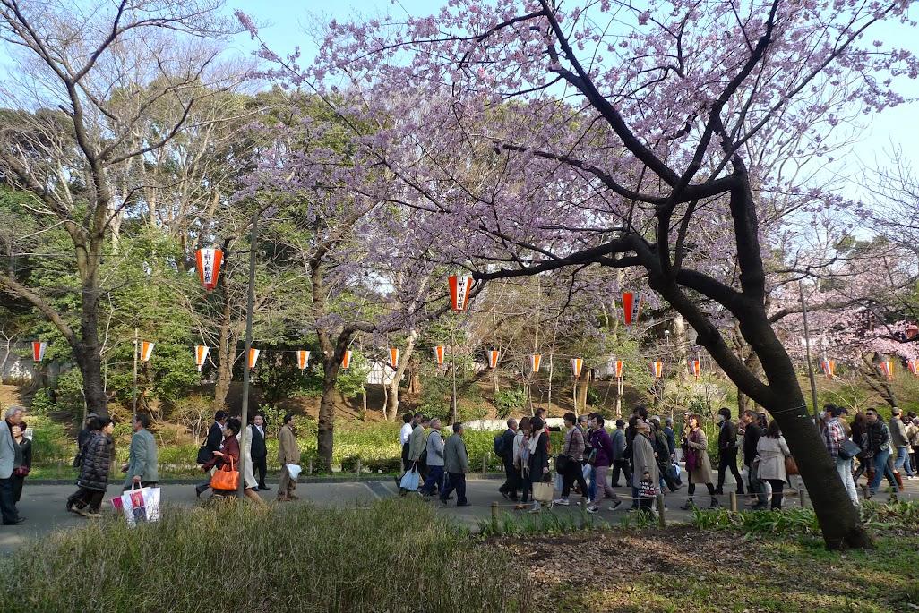 tokyo parc ueno sakura