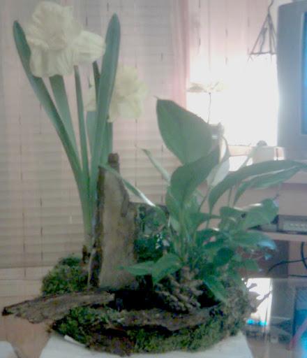 jardin-plantes-vegetatif