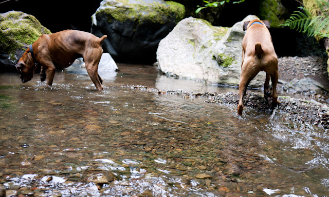 boxers at the creek