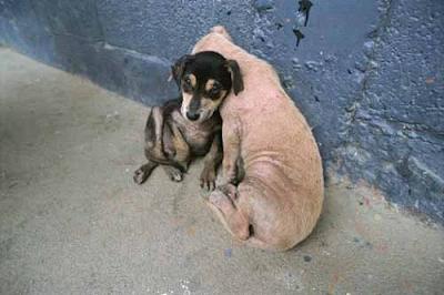 Бездомные собаки зимой картинки