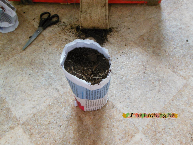 Seedling Paper Cup