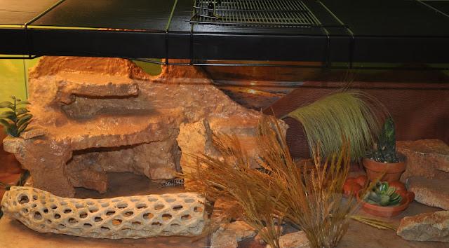 Leopard Gecko Plete Setup 20 Gallon