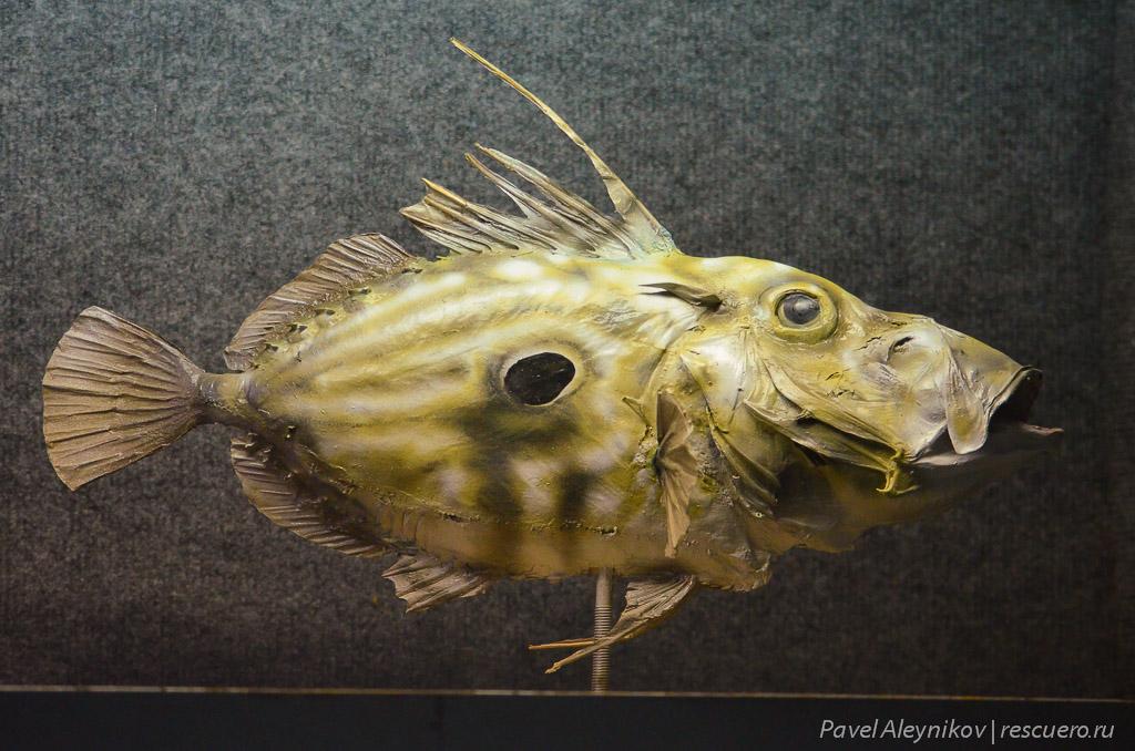 Засушенная глубоководная рыба