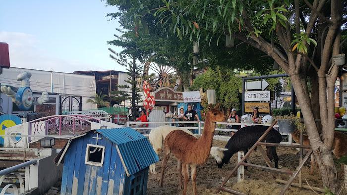 Alpaca view for Alpaca view farm cuisine