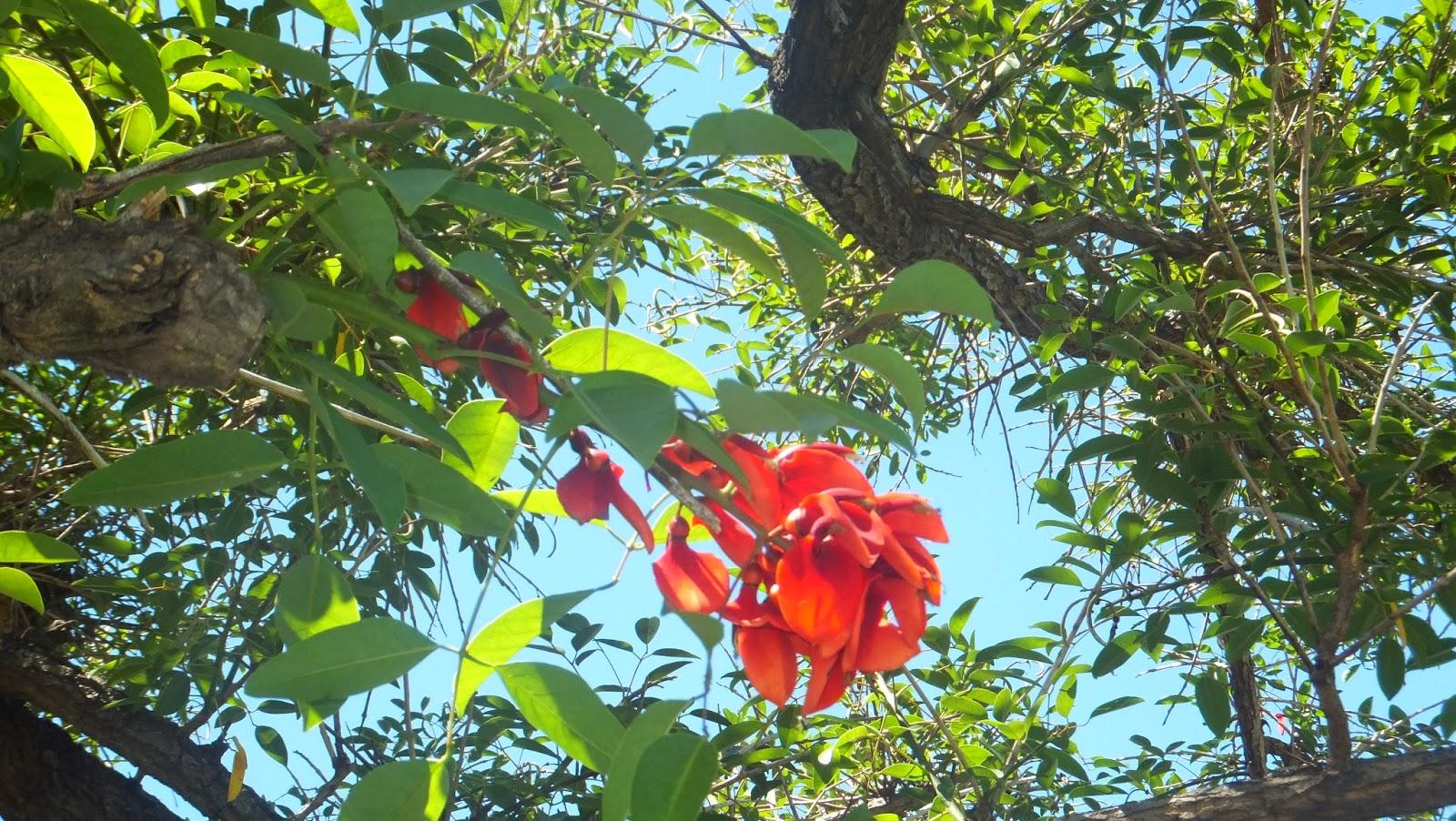 Flor de Ceibo, Rosario, Argentina, Elisa N, Blog de Viajes, Lifestyle, Travel