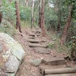 Near the bottom of Patonga Track (54227)