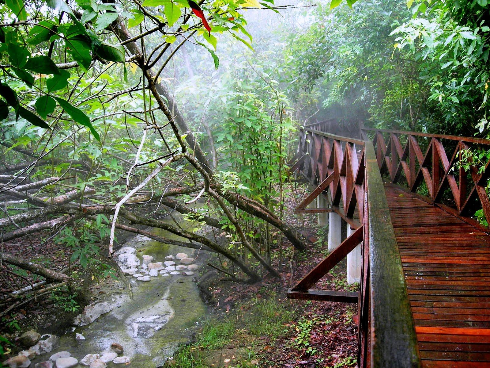 Sungai klah hot springs - The Steamy Boardwalk