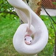к чему снится змея в доме