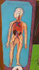 kan dolaşımı sistemi