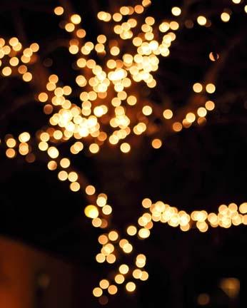 Lighting Up The World | Katja Dewdrop Studio