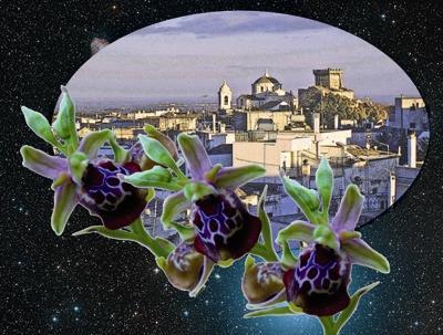 Ceglie e orchidea