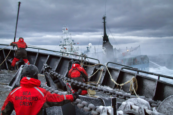 Harpoon vessel crosses the bow of the Bob Barker at close range during a 6-hour attack. Photo credit: Simon Ager, Sea Shepherds Australia