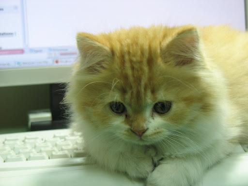 20071217 壓在鍵盤上的橘子
