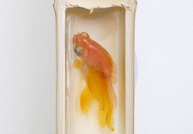 goldfish resin 3d Riusuke Fukahori 12