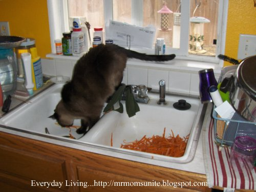 photo of yum yum in the sink with carrot peelings