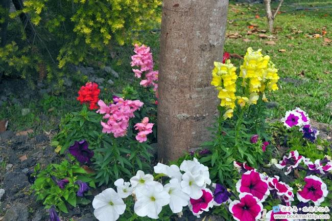魔菇部落生態休閒農場五顏六色的花